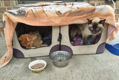 Brinkley_Cat_Epi05