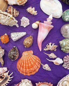 Elise Mesner @lellopepper Saw seashells by ...Instagram photo | Websta (Webstagram)