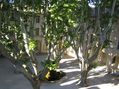 Le Cloître Saint Louis luxury hotel in Avignon, France, was converted from a old monastery. The light on the plane trees in the courtyard is just beautiful.