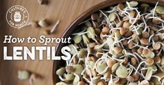How To Sprout Lentils | Step-by-Step Sprouting Instructions