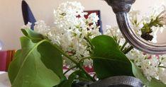 Hei :) For en stund tilbake fikk jeg forespørsel om jeg ville hjelpe til og dekke bordet til min venninnes sønn som skulle stå til konfirm... Plants, Plant, Planets