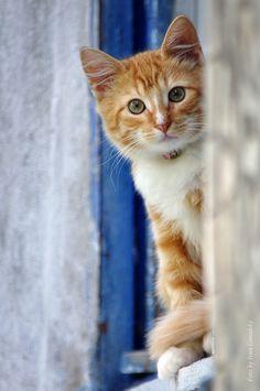 Window Cat, Precious=^..^=
