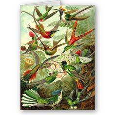 Trochilidae - Ernst Haeckel illustration from Kunstformen der Natur (Art Forms of Nature) plate Art And Illustration, Botanical Illustration, Hummingbird Illustration, Art Colibri, Ernst Haeckel Art, Natural Form Art, Illustration Botanique, Hummingbird Art, Nature Drawing