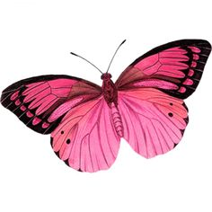 I like this butterfly too. I love the black edging of the other butterfly better and would like to see it all around the wings. Still beautiful tho. Butterflies Flying, Beautiful Butterflies, Pink Butterfly, Butterfly Wings, Vintage Clipart, Butterfly Pictures, Beautiful Creatures, Pretty In Pink, Moth