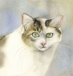 """""""yellow and white cat"""" by Alfred Ng. Watercolour on Paper, Subject: Animals and birds, Photorealistic style, One of a kind artwork, Signed on the front, This artwork is sold unframed, Size: 30.48 x 30.48 cm (unframed), 12 x 12 in (unframed), Materials: watercolor on arches watercolor paper Arches Watercolor Paper, Watercolour, White Catsuit, Cat Wallpaper, Pet Birds, Yellow, Artwork, Animals, Style"""