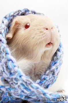 I miss my guinea pig..