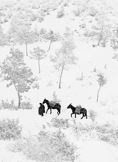 "last-picture-show: "" Fulvio Roiter, Umbria, 1954 "" Photography Exhibition, Art Photography, Vintage Photography, Into The West, Winter Scenes, Winter White, Belle Photo, Picture Show, Black And White Photography"
