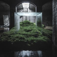 japanese architect hiroshi sambuichi has staged an ambitious installation within a former underground water reservoir in copenhagen. Instalation Art, Bio Art, Interactive Art, Water Art, Sustainable Architecture, Sculpture Art, Cool Photos, Landscape, Design