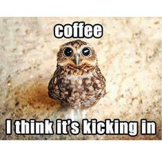Výsledek obrázku pro coffee meme
