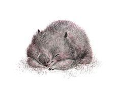 A little pencil sketch for Wombat Wednesday ~ Sydney Hanson gs♡ Art And Illustration, Art Illustrations, Cute Animal Drawings, Cute Drawings, Drawing Faces, Realistic Drawings, Pencil Drawings, Cute Wombat, Australian Animals