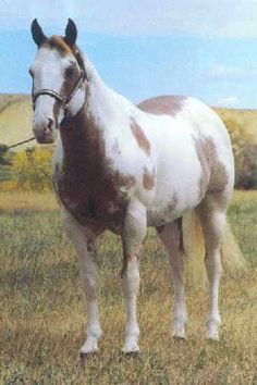 sizzlin hot quarter horse