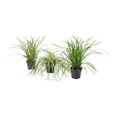 CAREX Potplant IKEA Decoreer je huis met planten in combinatie met een sierpot die bij je stijl past.