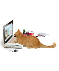 Another great find on #zulily! Cat Scratching Post Laptop #zulilyfinds