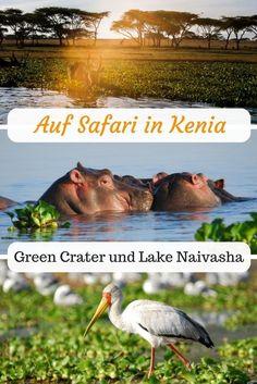 Wer sich eine abwechslungsreiche Safari in Kenia wünscht, sollte  unbedingt einen Halt an einen der zahlreichen Seen, wie zum Beispiel dem Lake Naivasha mit einplanen.   #Kenia #LakeNaivasha #Safari #SafariKenia
