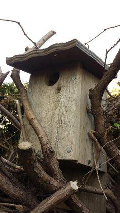 DIY Bird Baths, Bird Houses, Bird Feeders, and How to Keep Your Backyard Birds Happy by Pioneer Settler at http://pioneersettler.com/bird-bath-ideas-for-bird-paradise/