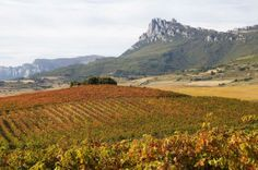 Spanish wine trails: Rioja and Ribera del Duero