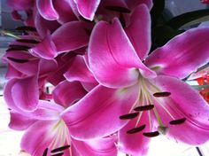 Pink Lillies, one of my faves!!!
