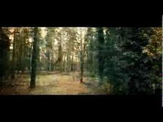 Thetford Forest by droneology
