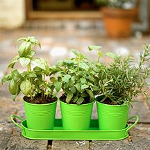 Grow your own herbs! Love it! And the best part, they don't take up too much space if you live in an apartment!
