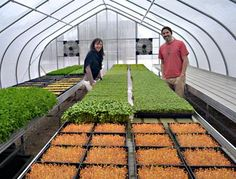 Good Water Farms Microgreens- our favorite source for microgreens!