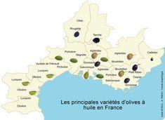 Carte des principales variétés d'olives à huile en France