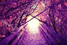 Pretty Purple <3