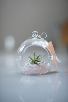 our wedding // ceremony   reception   details A Fabulous Fete  wedding favor - small hanging glass globe w/ sea glass and an air plant