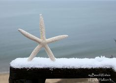 Beach Theme Photography- Winter Starfish, coastal photo art. Starfish photo art- Our first winter snow brought the photographer out to play! I love the simple beauty of the Winter Starfish perched in the freshly fallen snow on the rail overlooking the ocean. A perfect addition to your coastal decor, my Winter Starfish adds a touch of blue to your winter update and holiday decorating. My beach themed photo works well in today's natural looking décor, the larger sizes adding a focal point…