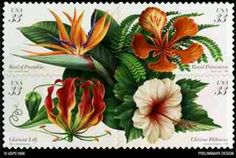 Tropical postage stamp