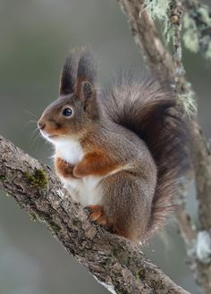 Squirrel The Effective Pictures We Offer You About Rodents memes A quality picture can tell you many things. You can find the most beautiful pictures that can be presented to you abo Animals And Pets, Baby Animals, Funny Animals, Cute Animals, Woodland Creatures, Woodland Animals, Beautiful Creatures, Animals Beautiful, Cute Squirrel