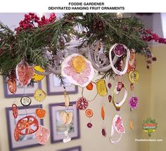 Dried, dehydrated fruit ornaments hang from a dining room chandelier. Learn how to make this Foodie Gardener craft designed by Shirley Bovshow and seen on the Home & Family show on the Hallmark channel! Great Christmas ornament and gift!