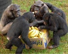 monkey world nursery group