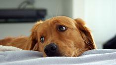 Собачий взгляд фото