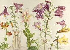 Elizabeth Blackadder - The Scottish Gallery, Edinburgh - Contemporary Art Since 1842