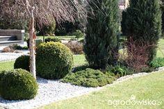 Ogród Dominiki - strona 101 - Forum ogrodnicze - Ogrodowisko