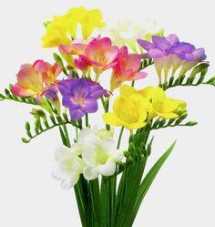 Fresia flowers - gorgeous!