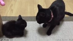 Boop that floof! | Gif Finder – Find and Share funny animated gifs