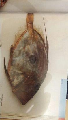 Ryba2