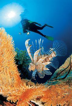 Sharm el-Sheikh, Egypt Underwater