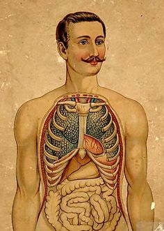from a 19th century anatomy book - Like a sir.  I want to know why the males in my anatomy book didn't have a mustache and blush.