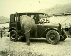 how many people does it take to help an elephant into a car...yeah - none