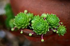 Notes On A Visual Life: Succulent Extravaganza