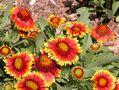 12 Perennials That Butterflies Love  Easy-to-Grow Nectar Plants for a Butterfly Garden