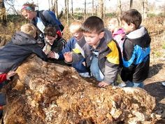 Campfire Friday: Reptiles and Amphibians Springfield, Virginia  #Kids #Events