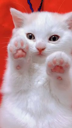 Super Cute Funny Kitten cat Videos Compilation | #funnycat #funnycatvideos #funnyanimals #Shorts Funny Cat Videos, Funny Cats, Funny Animals, Cute Animals, Super Cat, Cat Gif, Cats And Kittens, Cat Lovers, Shorts