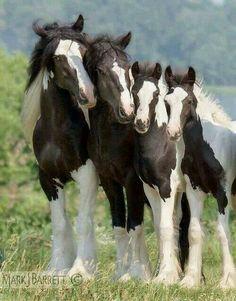 Pinterest photo - #horse