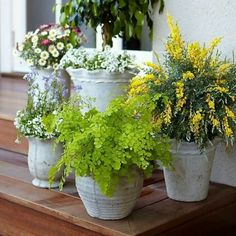 Pretty Scalloped Planters with Different Flowers