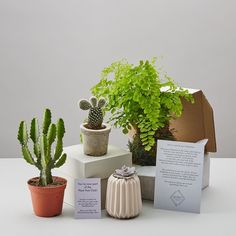 Have you heard about #PlantPostClub - a plant subscription SURPRISE service brought to you by #geofleur. Subscribers receive a monthly surprise package of plants or plants accessories.  Plant subscriptions created in geo-fleur's East London studio. A plant subscription means you will never have to worry about a last minute birthday present again it also makes for a thoughtful gift for any plant lover or for those who are a little tricky to buy for.  Sign up now by clicking the link in our…