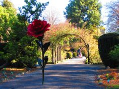 Take a stroll through Christchurch Botanical Gardens Gardens Of The World, Famous Gardens, Us Images, Virtual Tour, Botanical Gardens, Night Life, New Zealand, Travel Guide, Things To Do