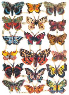 Butterflies scraps